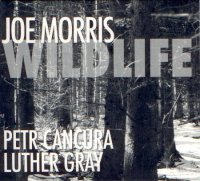 Joe Morris : « Wildlife » -  voir en grand cette image